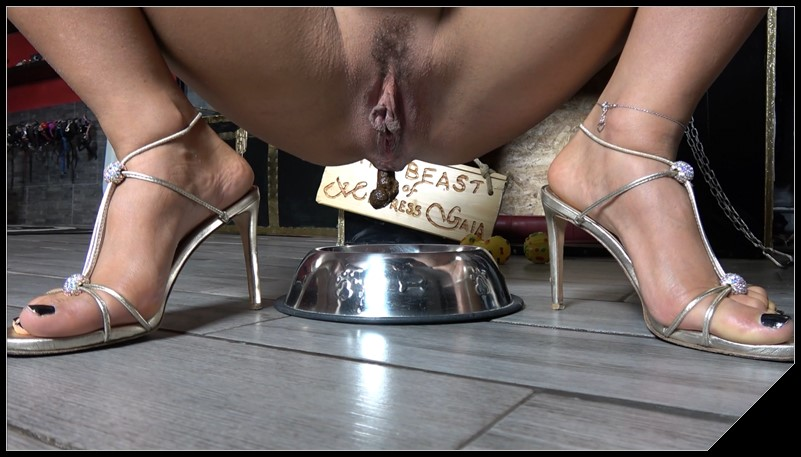 Enjoy your meal dog Mistress Gaia Poop Videos Groups Couples Toilet Slavery cover - Enjoy your meal dog - Mistress Gaia [Poop Videos, Groups-Couples, Toilet Slavery]